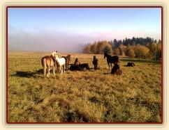 13.11.2011 - Hřebci odpočívají na pastvině, v pozadí mlha stoupající z údolí