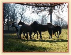 """Nový kůň je potřeba ihned """"ochutnat"""" :-)"""