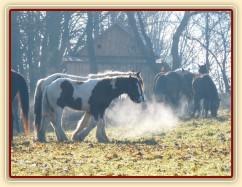 Vyrábíme mlhu:-)