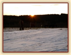 Stádo klisen při východu slunce