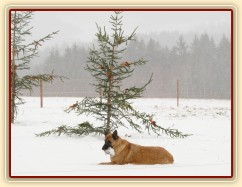 Samantha hlídá stromečky:-)