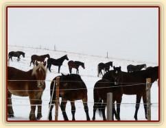Koně koukají, co se jim to připravuje...
