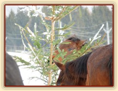 Kůň v lese:-)