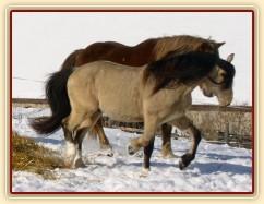 """Zimní pastvina, """"hra na babu"""" :-)"""