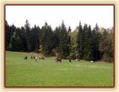 30.4.2012 - Tráva roste, takže koně hlavy ani nezvednou:-)