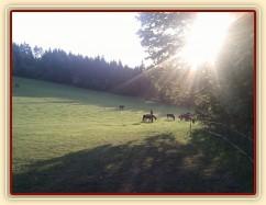 Stádo klisen při západu slunce