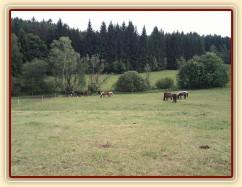 Stádo hřebců, pastva u potoka