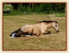 Porod, Greisy tradičně rodí pře den, abychom mohli dokumentovat:-)