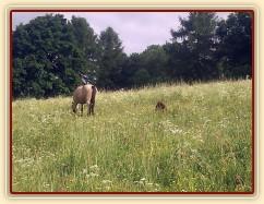 Hříbata nejsou v trávě ani vidět:-)