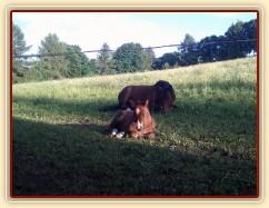 Bára a Baloo společně odpočívají