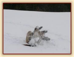 Válení ve sněhu je nejlepší :-)