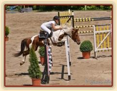 Vikina, rozeskakování parkuru ZL Domažlice, 8. místo z 80 koní