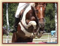 Vikina, parkur ZL Klatovy, 3. místo z 80 koní, srpen 2012