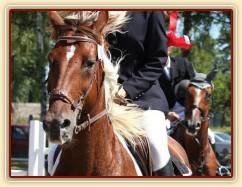 Vikina, dekorování parkuru ZL Klatovy, 3. místo z 80 koní, srpen 2012
