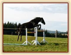 Skákání ve volnosti, pětiletý hřebec Carthago, oxer 130cm