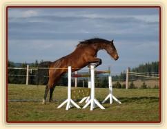 Skákání ve volnosti, šestiletá klisna Bára, oxer 130cm