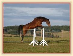 Skákání ve volnosti, šestiletá klisna Bára, oxer 140cm