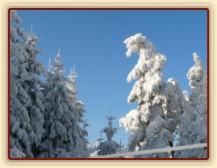 Omrzlé stromy