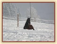 Siesta - nejlépe se spí na sněhu:-) tříletý Chesterton