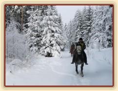 Lesní cesty jsou v zimě ideální na cválání...