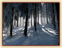 Krása zimního lesa