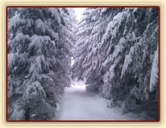 Lesní cesty se zmenšují:-)