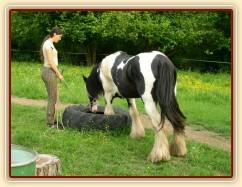 Bas, 7 her podle Pata Parelli - Bas se poprvé učí stoupnout do pneumatiky, jedna noha je uvnitř