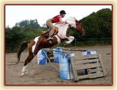 Vikina, tři měsíce ve výcviku, skokové řady jí šly vždy dobře...