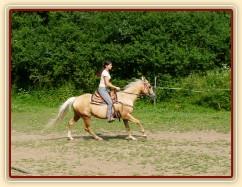 Quarter horse Jacs po třech měsících výcviku při ježdění na jízdárně  - cval