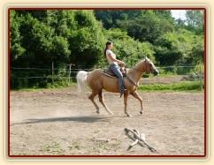 Quarter horse Jacs po třech měsících výcviku při ježdění na jízdárně  - zastavení ze cvalu