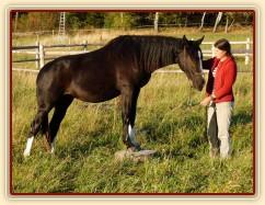 Kroona, stoupnutí na špalek - oblíbený cvik všech koní:-)