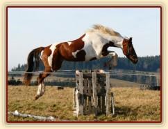 Skákání ve volnosti, osmiletá klisna Vikina, oxer 120cm vysoký