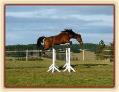 Skákání ve volnosti, šestiletá klisna Bára, oxer 145cm