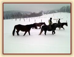 Mladí koně mohou před obsedáním chodit na vyjížďky s ostatními - krásně se nasvalí