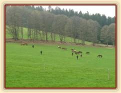 Stádo klisen, momentálně je v něm 21 koní