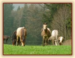 """Naši poníci, tradičně na jaře """"plesniví"""" :-)"""