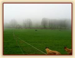 Psi mají vše pod kontrolou:-)