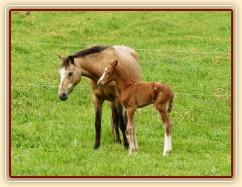 25.5.2013 - Greisy porodila kobylku po Ojoetsjni´s Grevenrit