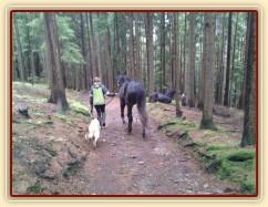 Omladina na procházce v lese