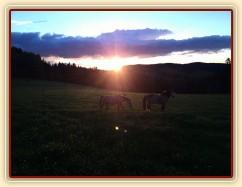 Naši poníci večer při západu