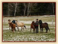 3.12.2013 - Goldie byla prodána do Německa. Ještě než odjela,udělali jsme společné foto Greisy a jejích potomků: zleva Galen, Goldie, Greisy, Griffin a Gimli