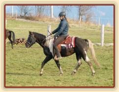Wanted Cherokees Fury, čtyřletý hřebec Paint horse