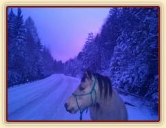 Galen na večerní procházce na bílé silnici