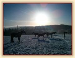 Koně odpočívají...