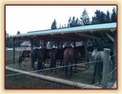 Vyrovnaní koně u sena