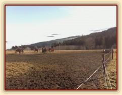 Koně mají občas veselou náladu:-)