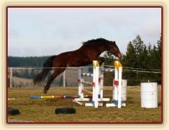 Skákání ve volnosti jaro 2014 - 130cm