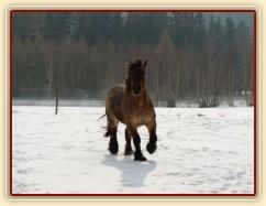 Pěkná zima, ardenka Fiona