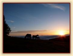Podzimní východ slunce a stádo hřebců