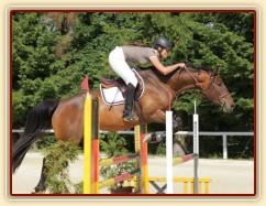 Ascara, KMK čtyřletých koní ve skocích (Z), Mariánské Lázně18.6.2014